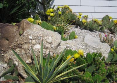 Blühendes Sukkulentenbeet