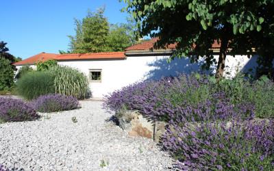 Mediterran: Lavendel