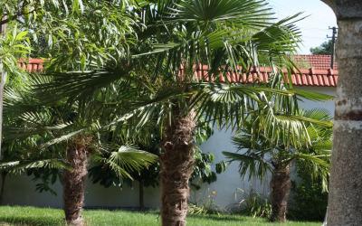 Palmen im Garten