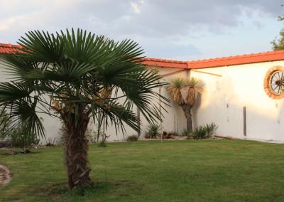 Im Palmengarten